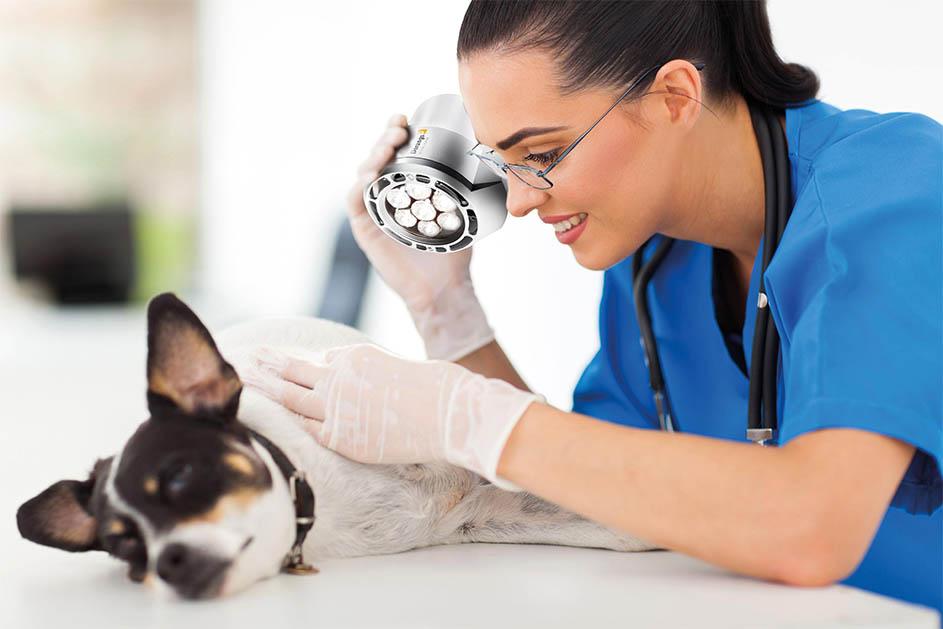 veteriner aydınlatma